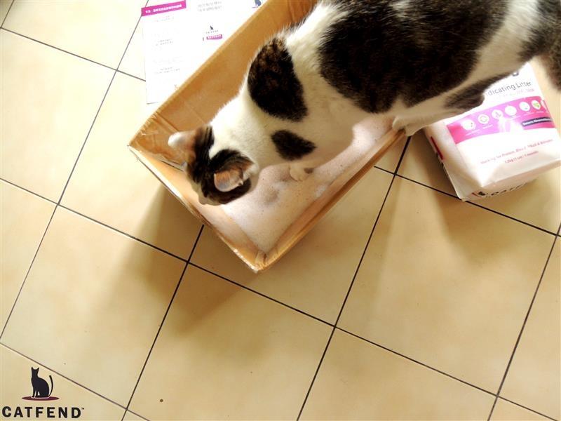 catfend 卡芬魔幻貓砂 044.jpg