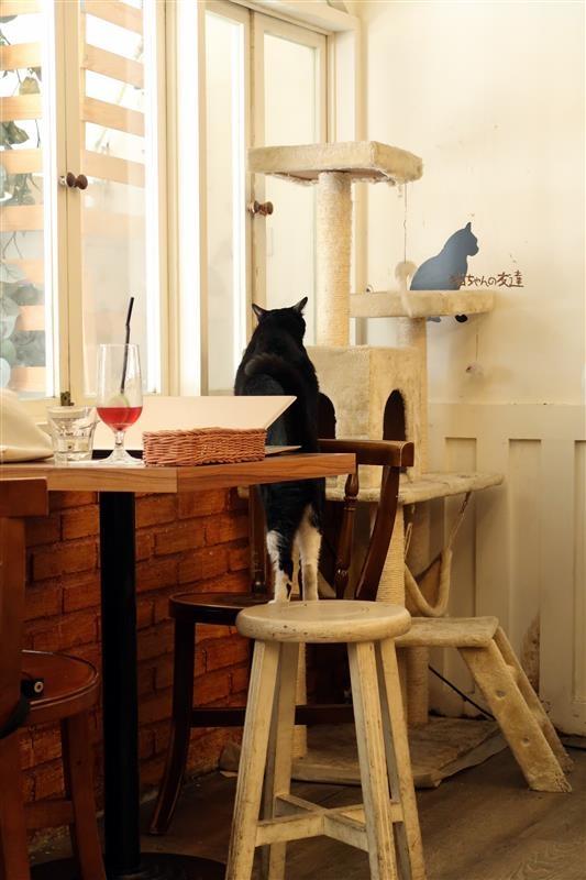 貓咪先生的朋友 065.jpg