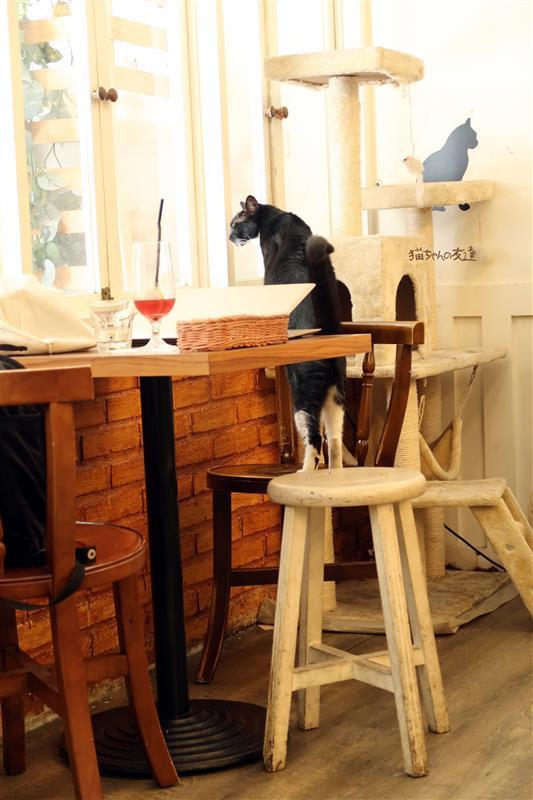 貓咪先生的朋友 066.jpg