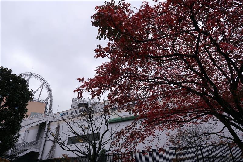 東京賞楓 小石川後樂園 003.jpg