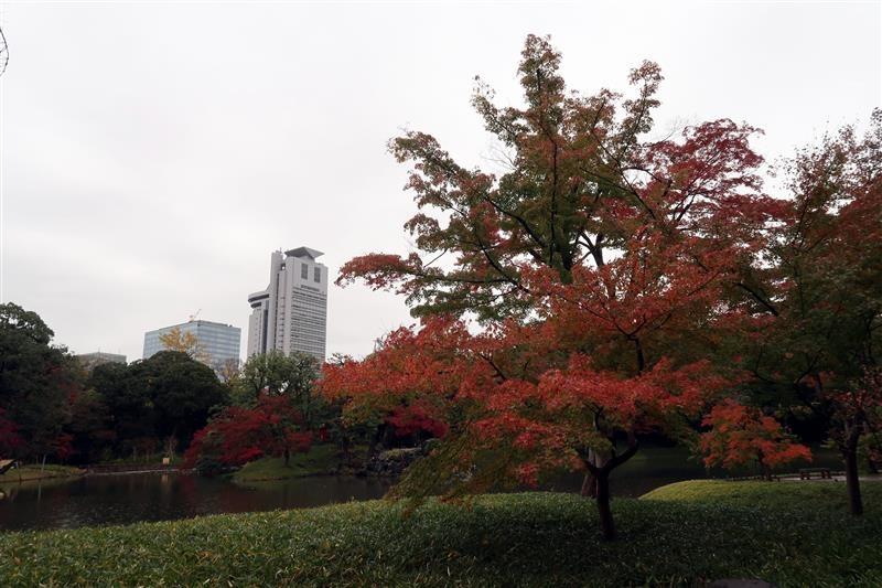 東京賞楓 小石川後樂園 011.jpg