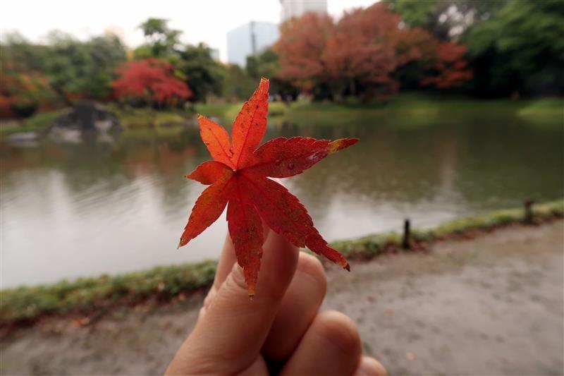 東京賞楓 小石川後樂園 020.jpg