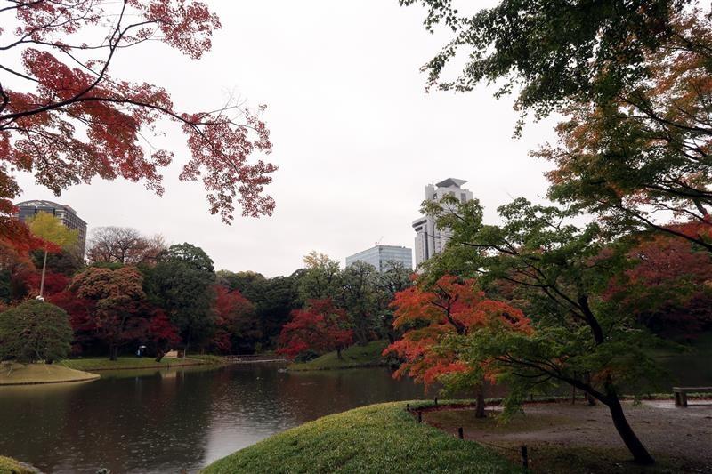 東京賞楓 小石川後樂園 018.jpg