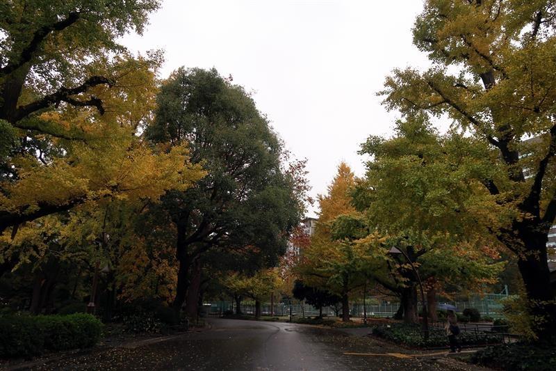 東京銀杏 日比谷公園 016.jpg