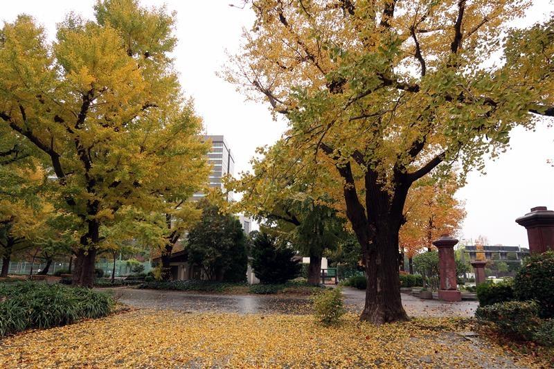 東京銀杏 日比谷公園 012.jpg