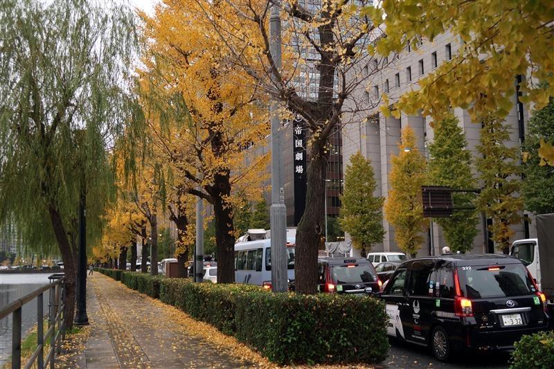 東京銀杏 日比谷公園 023.jpg
