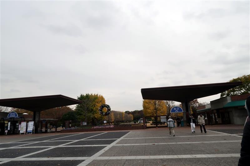 日本銀杏 國營昭和記念公園 001.jpg