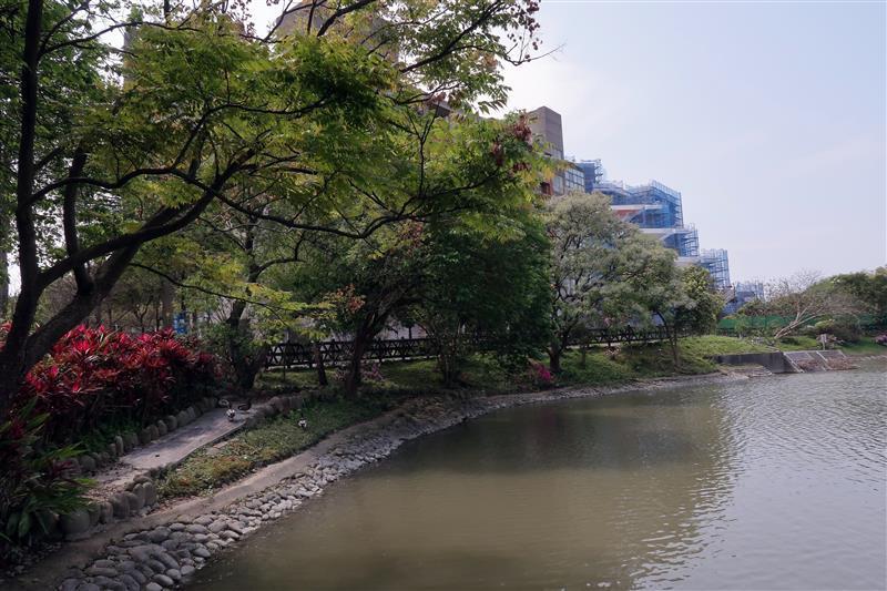 三峽 台北大學 櫻花 037.jpg