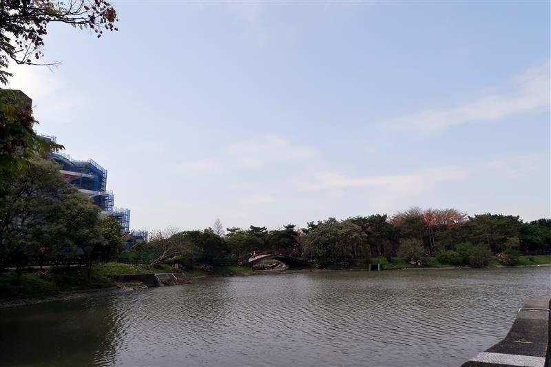三峽 台北大學 櫻花 038.jpg