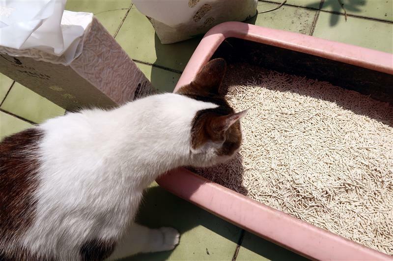 OLLIE CAT 真纖細豆腐砂豌豆砂 貓砂 馬桶 023.jpg