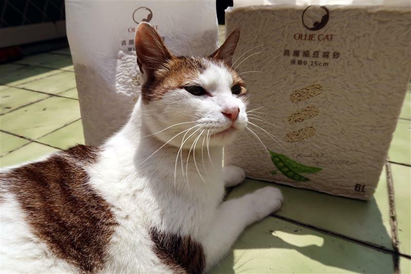OLLIE CAT 真纖細豆腐砂豌豆砂 貓砂 馬桶 020.jpg