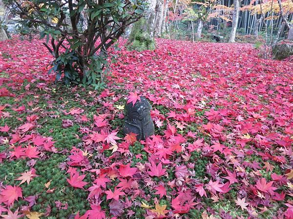 京都圓光寺的紅葉小地藏