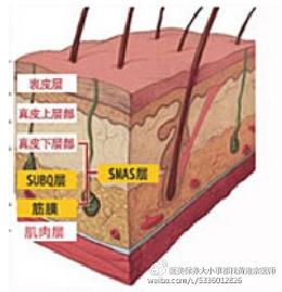 【醫學美容】膠原蛋白流失、雙下巴 、局部皺紋、臉頰鬆弛、眉尾下垂