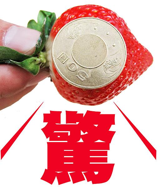 心型草莓台北濱江-3