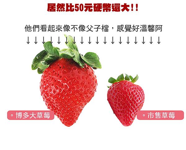 心型草莓台北濱江-4