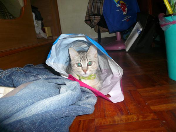 大老鼠愛塑膠袋