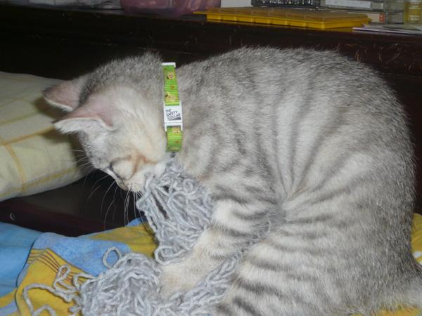 毛線球口味拉麵是大老鼠的最愛!