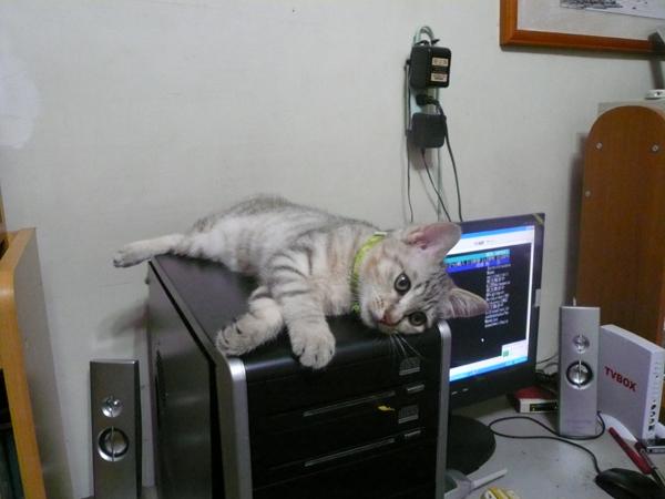 電腦是大老鼠的床