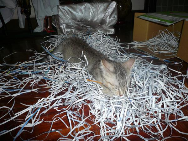 碎紙! 把家裡弄得一團亂!