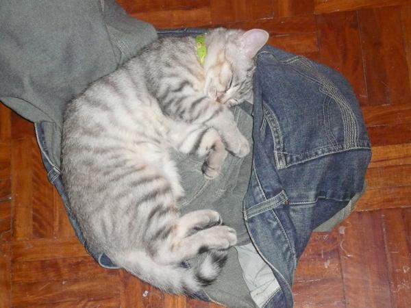 搶奪來的牛仔褲最好睡