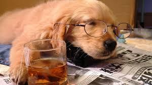 sleeping dog image