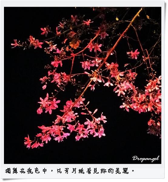 IMG_7214.jpg