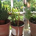 2004年在彰化花博買的幸運草罐頭