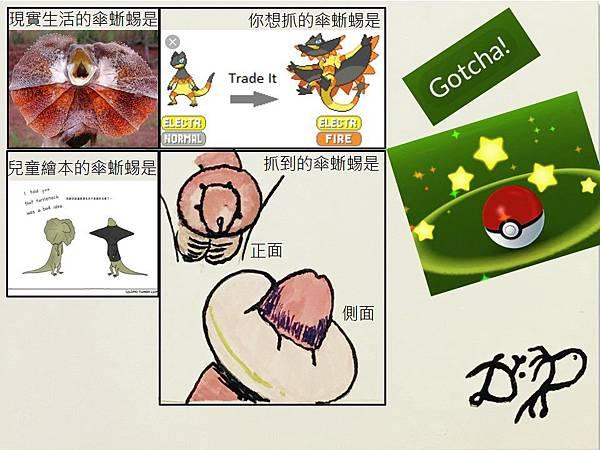 Gotcha傘蜥蜴.jpg