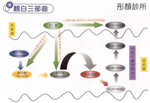 杏仁酸柔皙換膚.jpg