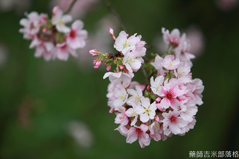 9903_Taipei_036.jpg
