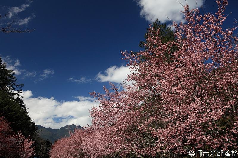 2014_Sakura_309