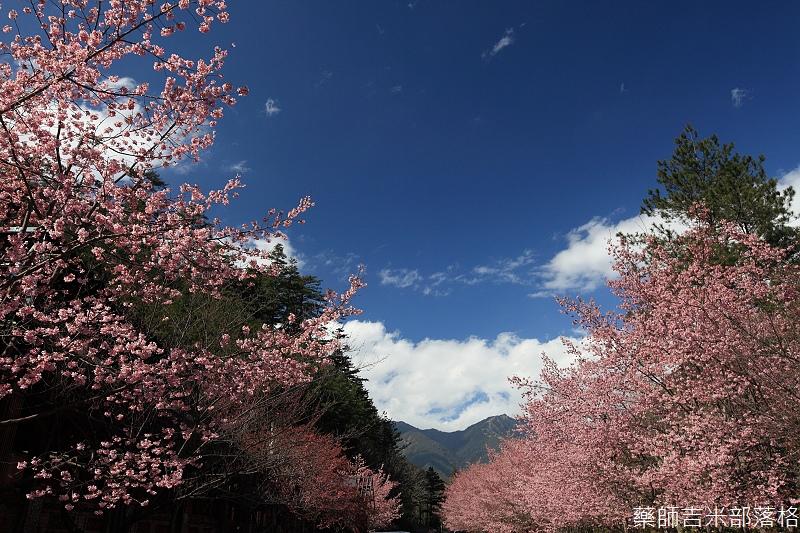 2014_Sakura_315