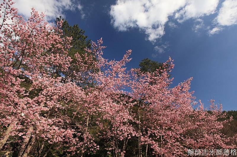 2014_Sakura_382