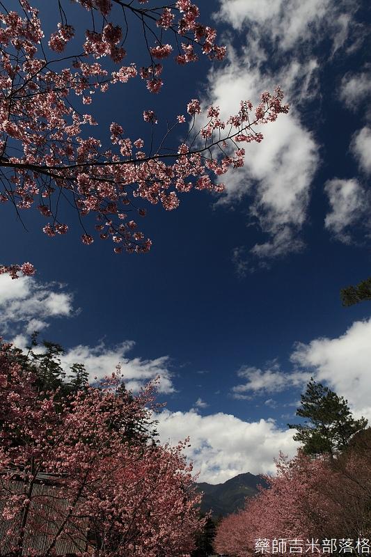 2014_Sakura_297