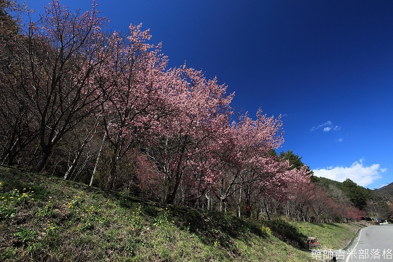 2014_Sakura_227
