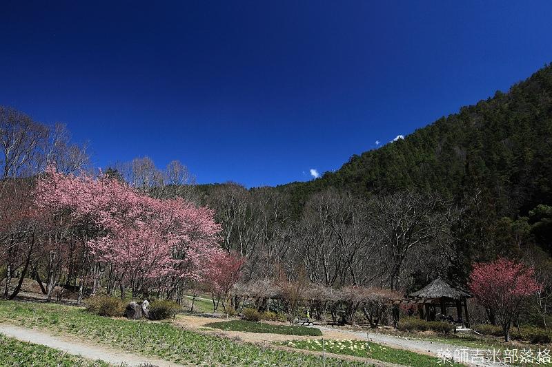 2014_Sakura_264