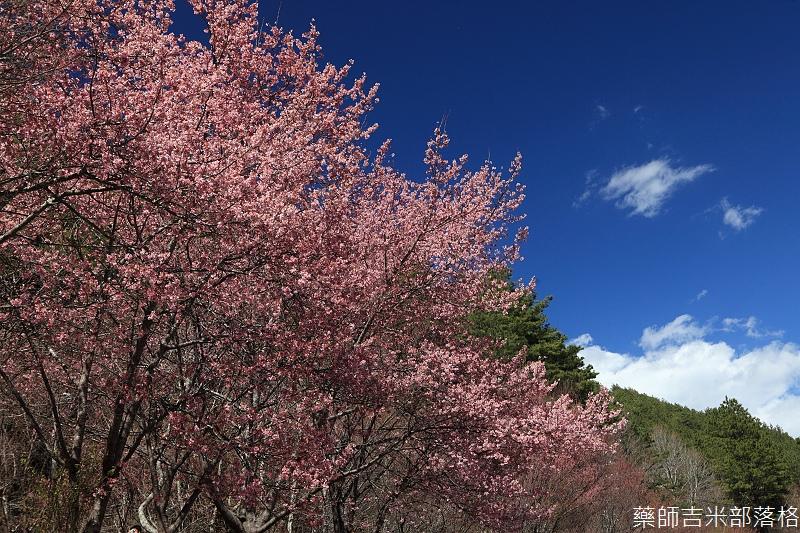 2014_Sakura_234