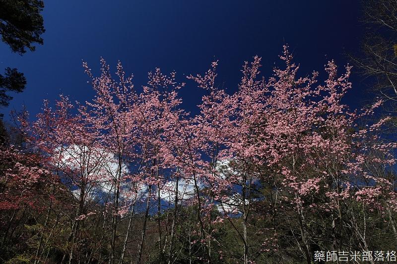 2014_Sakura_202