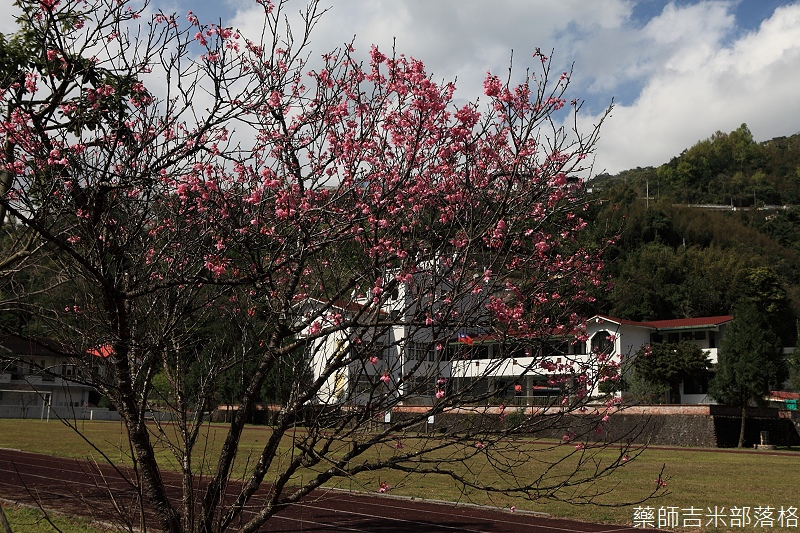 2014_Sakura_048