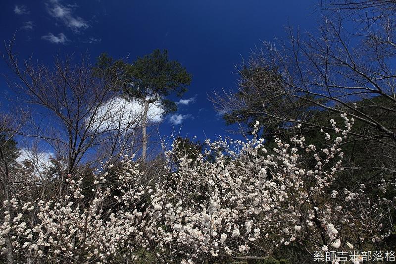 2014_Sakura_312