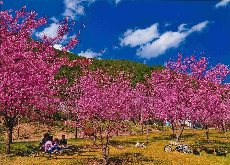 武陵富野渡假村圖片2.jpg
