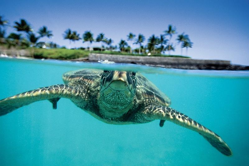 00093.Sea Turtle.jpg