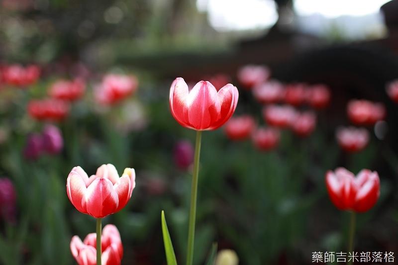 Nanyuan_farm_044.jpg