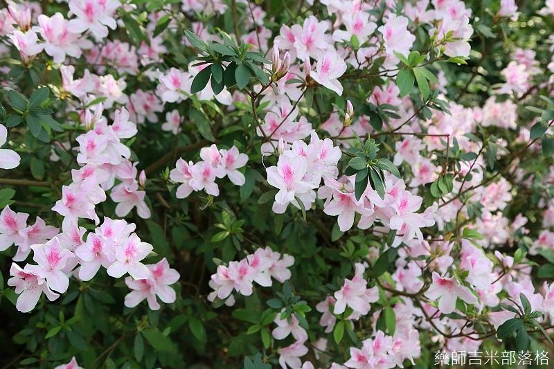 Nanyuan_farm_084.jpg