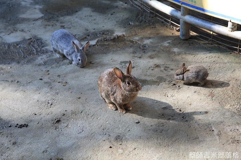 Nanyuan_farm_260.jpg