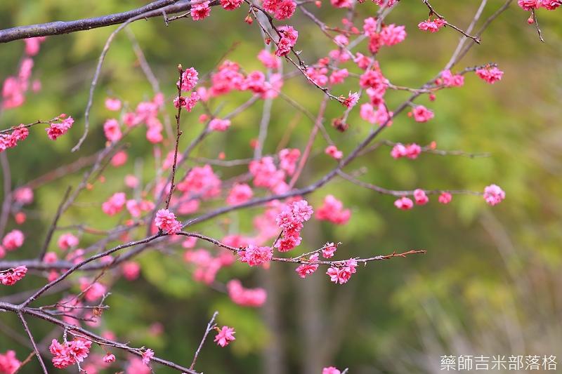 Nanyuan_farm_557.jpg