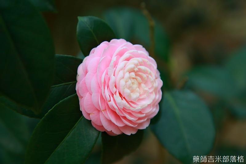 Nanyuan_farm_660.jpg