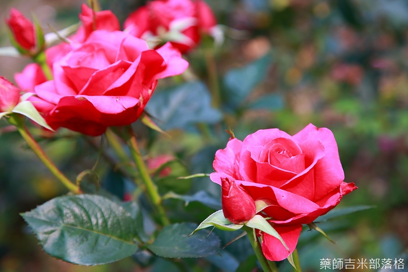 Nanyuan_farm_669.jpg