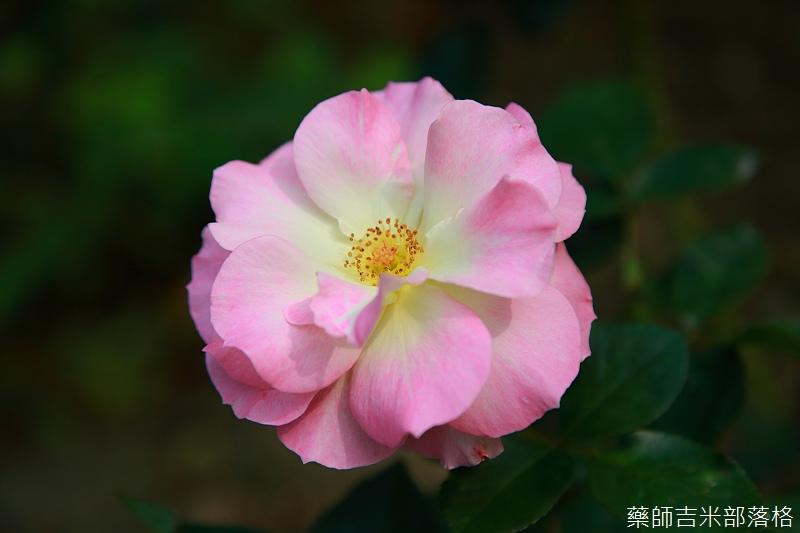 Nanyuan_farm_694.jpg
