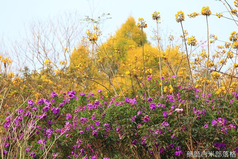 Nanyuan_farm_714.jpg